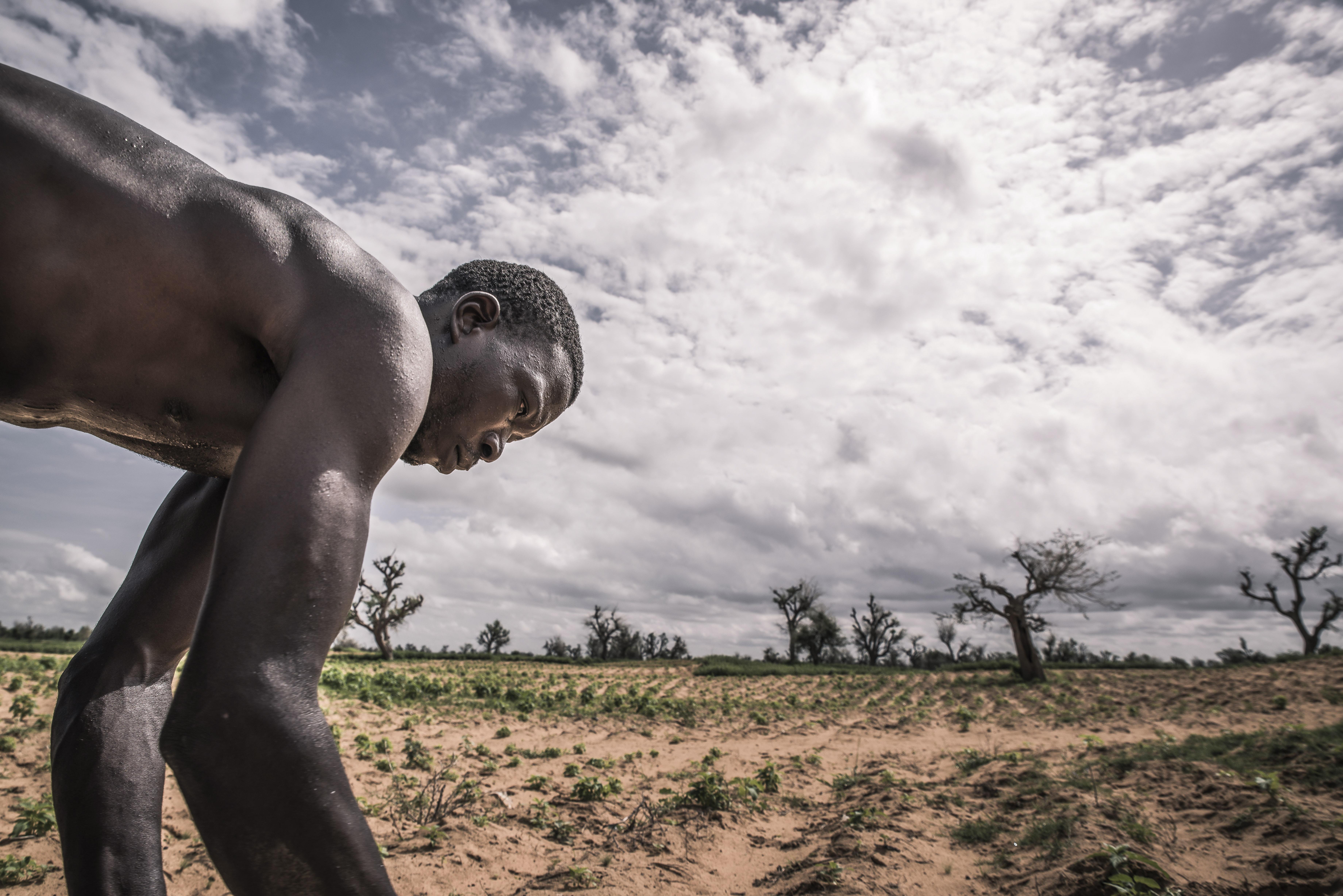 アフリカのマリで苗を植える農夫